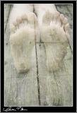 Feet That Were