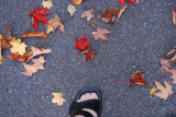 Step into fall with me...