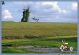 Le tricycle dans les champs