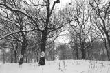 Peace trees.jpg