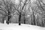 More Peace trees.jpg