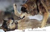 wildlife_720_800_pixel