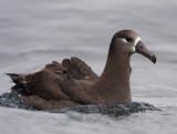 Monterey Bay CA pelagic trip