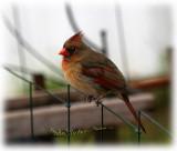 redbirds_2008