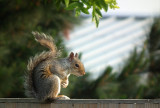 Sammy the Squirrel returns