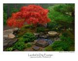 Laceleaf And Drip Fountain.jpg