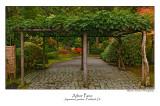 Arbor Pano .jpg