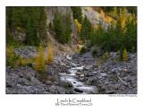 Larch In Creekbed.jpg