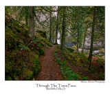 Through The Trees Pano.jpg