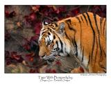 Tiger With Burgand Ivy.jpg (12 x 18 only)