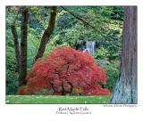 Red Maple Falls.jpg
