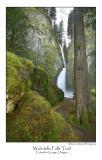 Wahclella Falls Trail.jpg