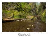 Oneonta Gorge 3.jpg