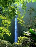 Afternoon sun at Akaka Falls Hawaii