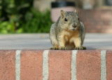 Squirrel welcome