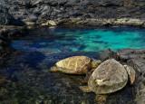 Turtles resting at Kiholo Bay