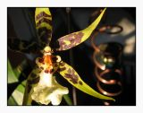 orchid & orb