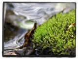 moss flow