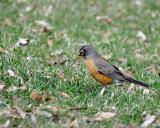Robin's Tug-of-War