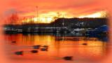Winter-Sunset  River Tista - Swimming Ducks
