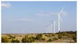 Wind Turbines, Horse Hollow, TX