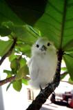 Baby Fairy Tern 2