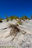 Elafonissi dune