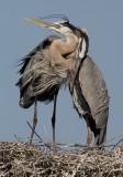Heron Embrace