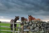 Horse Play  09_DSC_3404