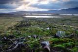 Rannoch Moor morning  10_DSC_5651