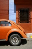 Beetle Coccinelle