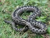 Reptielen en Amfibieen - Reptiles and Amfibians