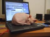 DSCF5336 Merlin on Laptop