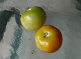 P1000016R Last tomatoes