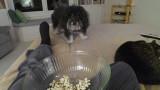 P1020527 Doggie Torture