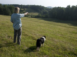 Border Collie Training at Green Cove Farm