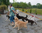 Spring Valley Farm Dog Care Kennels