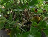 P1050767 Wren Nest