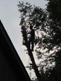 P1080915 Tree Cutter