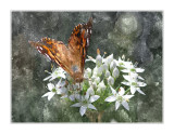 FotoSketcher - _MG_2727 Butterfly