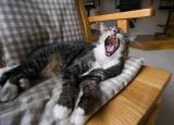 Exaggerated Cat