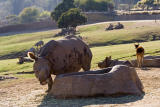 Rhinos at Trough