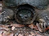 Wildlife Preserve Turtle