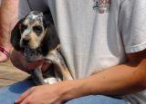 DSC01689 Puppy
