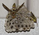 Watching a Paper Wasp Nest in My Entryway