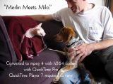 Merlin Meets Milo