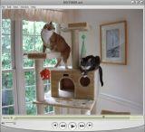Screen Grab of MP4