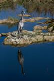 _MG_1383 Vertical Mirrored Heron