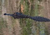 _MG_1602 Everglades Ripples