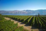 Road Through the Vines